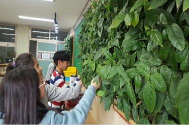 빌레나무, 실내 미세먼지 20% 줄여…보급 시범사업 확대