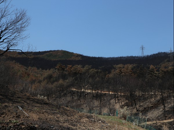강원 산불 피해 및 복구 현장을 가다