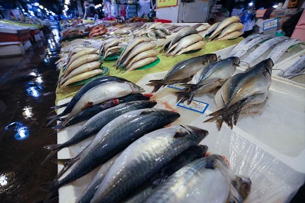 해양수산부는 올해 3월 연근해어업 생산량은 4만 7000 톤으로 지난해 3월(5만 4000 톤)에 비해 약 13% 감소했다고 밝혔다. 사진은 서울 동작구 노량진 수산시장에서 고등어들이 손님을 기다리고 있는 모습.(사진=저작권자(c) 연합뉴스, 무단 전재-재배포 금지)