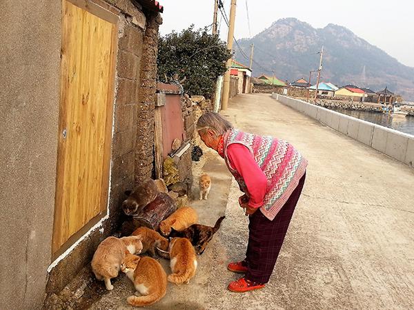 고양이에게 먹이를 주고 있는 주민.
