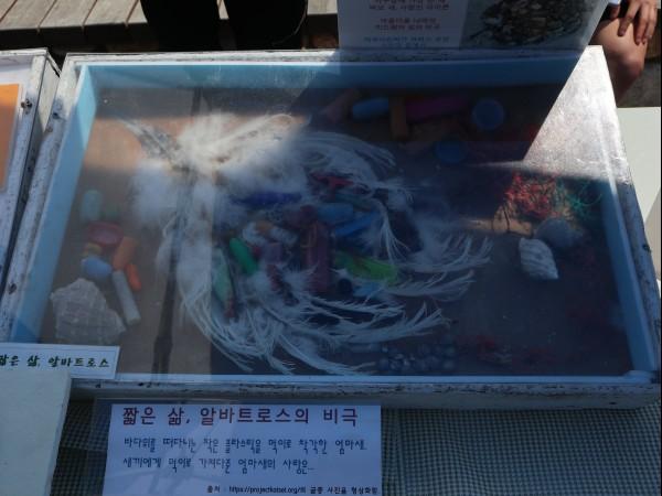 죽은 아기새의 배에서 나온 플라스틱 쓰레기