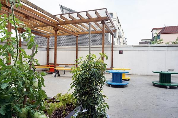 야외마당에서는 식물을 볼 수 있다.