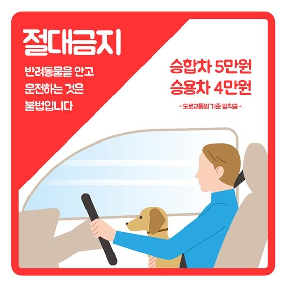 펫팸족이라면 알아야 할 반려동물 도로교통법