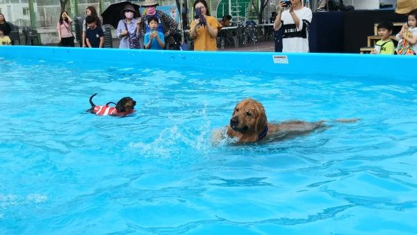 지난 6월 조선대학교에서 펼쳐진 광주세계수영선수권대회 기념