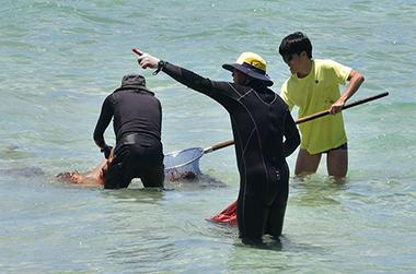 해수욕장 독성해파리 쏘임 사고 조심하세요