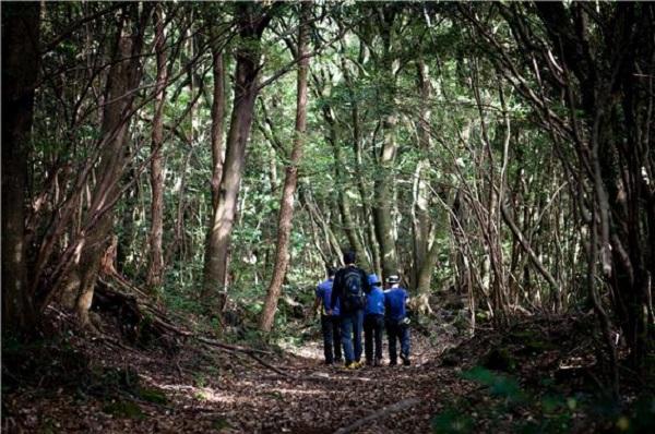 서귀포 효돈천과 하례리 마을 '고살리 숲길 탐방'