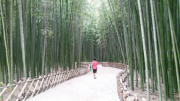 울산 태화강 주변에 위치한 십리대숲