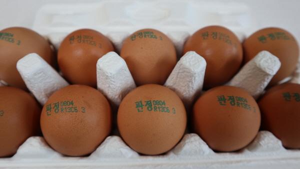 3군데의 마트를 돌아다녀 겨우 찾은 사육환경번호 3인 달걀
