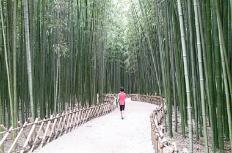 올 가을, 대숲 보러 국가정원에 가볼까?