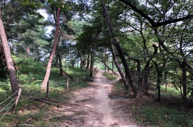 [가보니] 조선왕릉 숲길에서 소확행 즐기기!