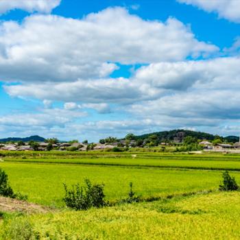 다양한 매력을 지닌 안동 류씨 집성촌, 안동 하회마을이 멀리 보인다
