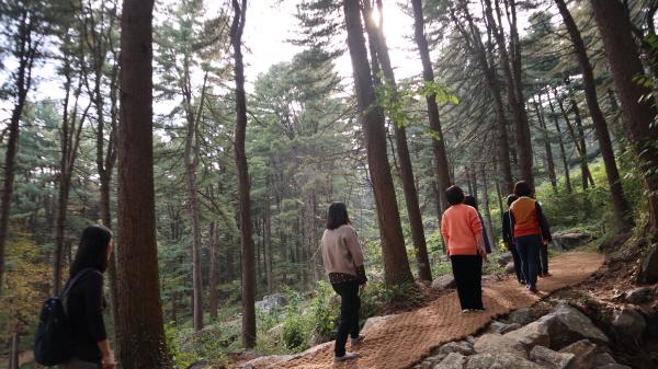 전국 최대의 잣나무 숲에 조성된 산책로를 따라 걸으면 저절로 아픔이 치유되는 느낌을 받는다.