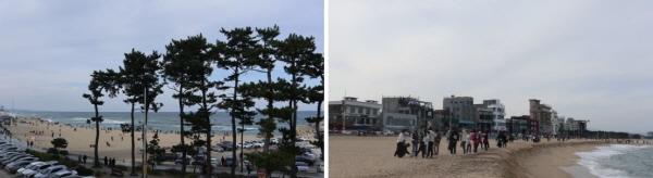 강릉커피거리와 안목해변에도 커피와 바다를 함께 즐기려는 관광객들로 붐빈다.