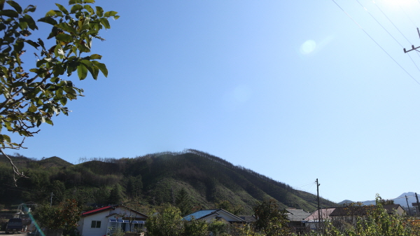 언제 불에 탔느냐고 할 정도로 놀라운 복원력을 보인 옥계면 산과 들이 파랗게 변해있다.