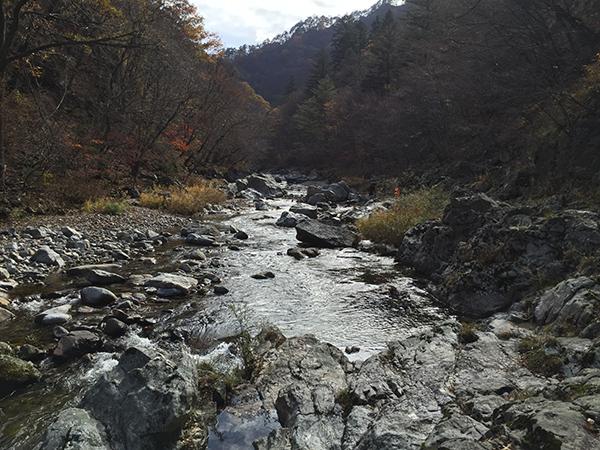 가을과 겨울 사이. 아침가리숲의 계곡.