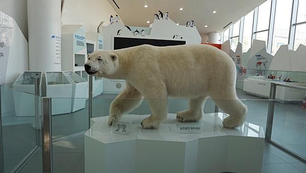 우리나라에 세 점 밖에 없다는 박제된 북극곰