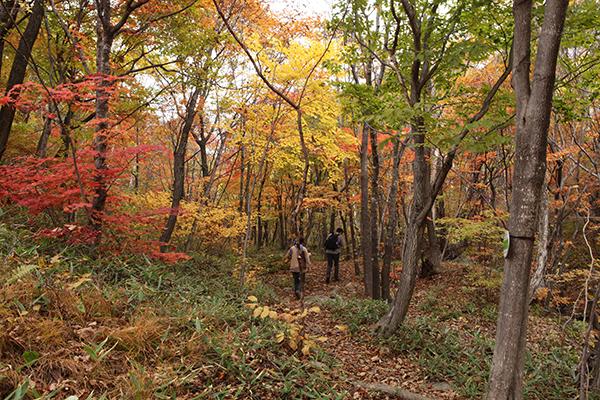 부드러운 청옥산 생태경영림 숲길이 늦가을 정취로 무르익었다.