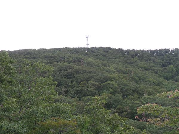 다양한 종류의 나무로 울창한 숲을 이루고 있는 청옥산.
