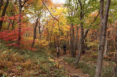 풍요롭고 여유로운 그 숲, 늦가을에 반하다