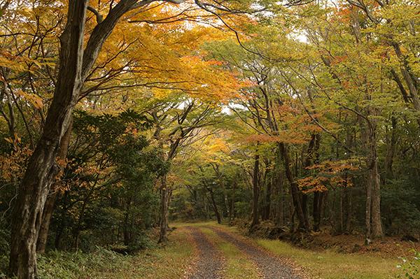 서어나무 터널숲.