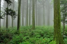 제주 산림의 신령스러움과 역사를 간직한 숲