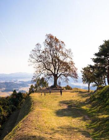 성흥산의 상징이자, 성흥산 솔바람길의 백미 사랑나무