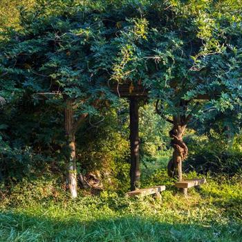 사랑나무와 팔각정을 지나 만날 수 있는 쉼터