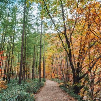 전나무 길