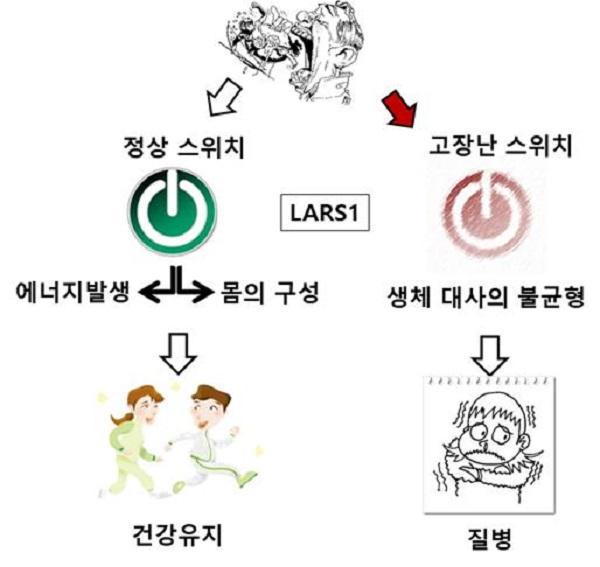 우리 몸의 에너지 대사 과정과 LARS1