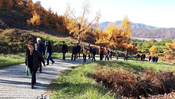 관람객들이 적보산 씨앗숲의 낙엽송을 둘러보고 있다.