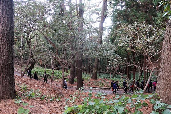 숲이 평온해 걷는 사람들이 행복하다.