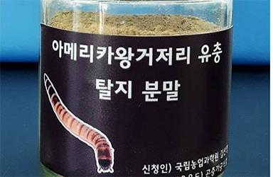 아메리카왕거저리 유충, 새로운 식품원료로 인정