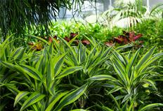 건조한 겨울철, 가습 효과 좋은 반려식물 2가지