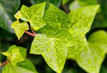 초보자가 키우기 쉬운 반려식물은?