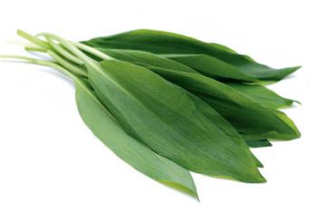 면역력 강화에 도움되는 식품 ② 두릅·미나리·산마늘