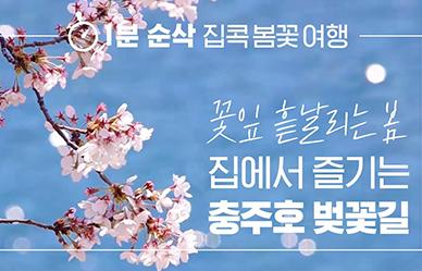 [방구석여행] 충주호 벚꽃길, 집콕 스트레스 날려버리는 봄기운 받으세요!