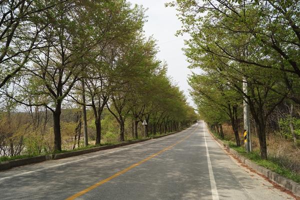 여주흥천남한강 벚꽃길이다. 지금은 벚꽃이 다지고 푸르름으로 가득찼다.
