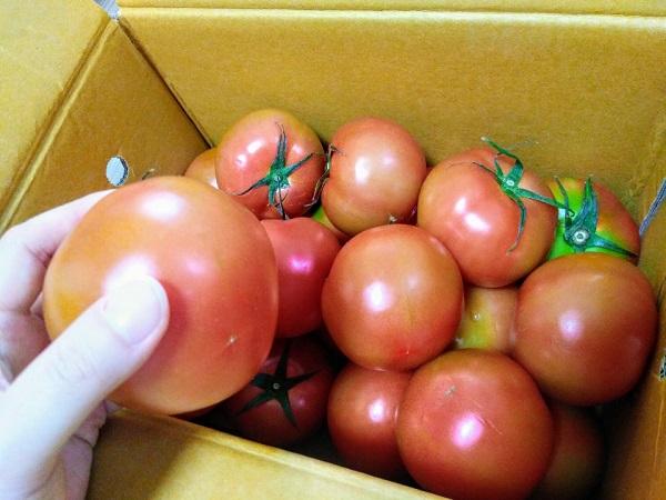 인빌쇼핑(https://www.invil.org)에서 주문한 전남 화순 제철 토마토 5kg.