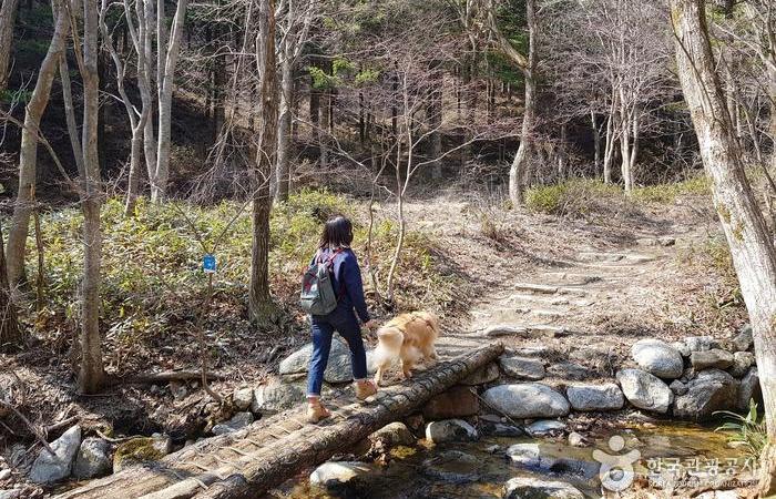 코스 초입, 숲속 계곡을 건널 수 있게 놓인 나무다리