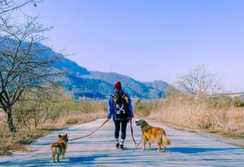 5월 걷기여행길, 반려견과 함께 걷는 산책길 5곳