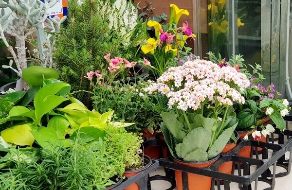 꽃집에 가니 모든 꽃이 다 활기를 주는 듯보였다. 한 화분을 날 위해 샀다.