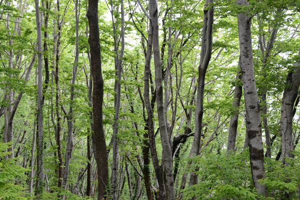 성인봉 가는 길. 울릉의 여름은 초록이 가득하다.