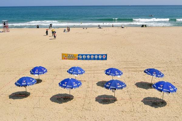 부산 해운대 해수욕장에 파라솔이 2m 간격으로 설치돼 있다. <사진=부산해운대구청>