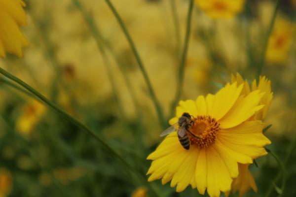 북하마을에 핀 노랑꽃.