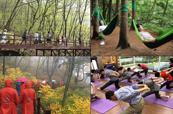 다스림 숲 나들이, 해먹 명상, 우천대체-우중 산책, 소도구 운동 등으로 구성되는 숲 치유 프로그램.