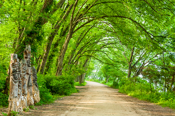 산림청은 올해 3차 추경사업의 일환으로 올해 숲길 연결망 구축 및 숲 관광 자원조사 사업을 진행해 민간에 기초자료를 공개하기로 했다.(사진=산림청 제공)