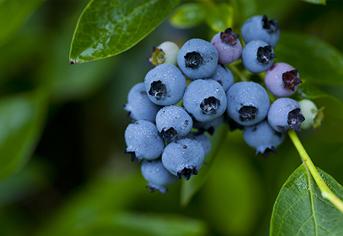더위 물리치는 새콤달콤한 건강 여름과일 7가지