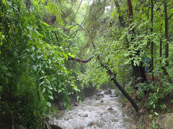 비가 올 때 계곡 옆에 있는 건 자살행위나 마찬가지다. 최대한 빠른 시간내 대피하는 게 최선이다.