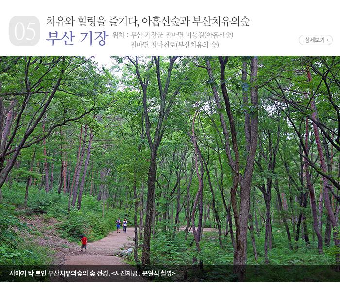 치유와 힐링을 즐기다, 아홉산숲과 부산치유의숲 - 부산 기장군