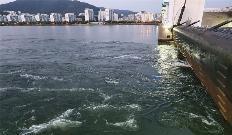 낙동강 하굿둑 개방하니 고등어·농어 돌아왔다…생태복원 가능 확인